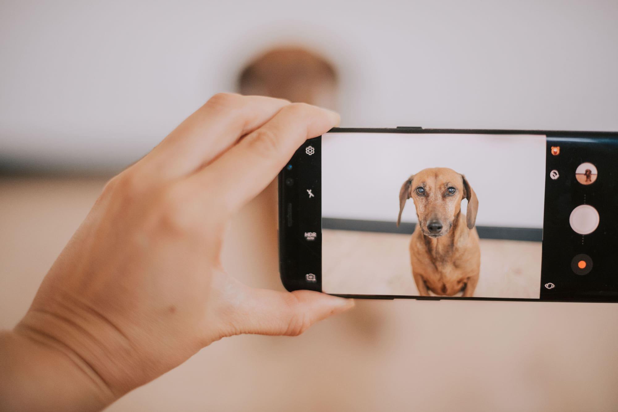 Cover Blog con cagnolino